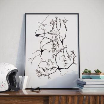 A restored print of Stellate neurons in the cerebellum  - one of Santiago y Cajal's famous sketches of neurons. Stellate neurons in the cerebellum. A unique gift idea for those studying neurology, teachers or those who just love science and medicine.
