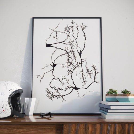 A restored print of Stellate neurons in the cerebellum  – one of Santiago y Cajal's famous sketches of neurons. Stellate neurons in the cerebellum. A unique gift idea for those studying neurology, teachers or those who just love science and medicine.