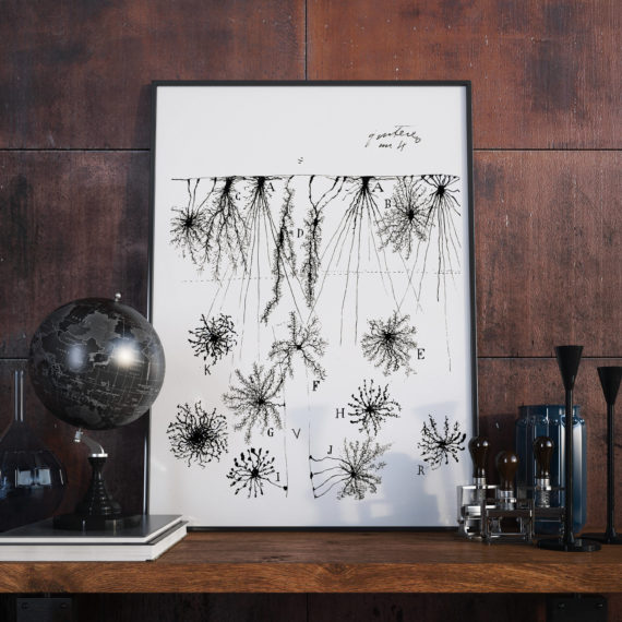 Santiago Ramon Cajal's Glial Cells of the Cerebral Cortex