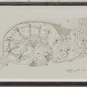 Pyramidal Neurons in the Hippocampus - Santiago Ramon y Cajal Art Print