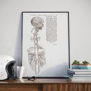 Drawing of Brain and the Nervous System - Andreas Vesalis