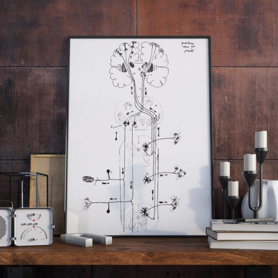 spinal cord neurons – Santiago Ramon y Cajal