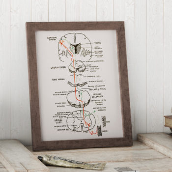 A Diagram Representing Motor and Sensory Neurons - Neurology Art Gift Set