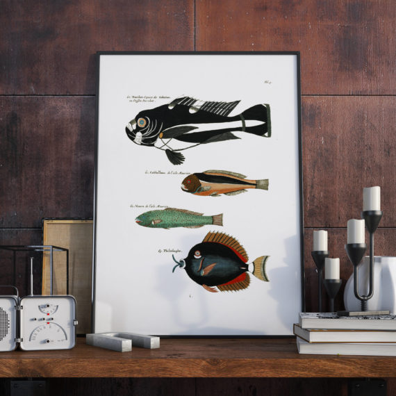 Aquarium Art – Fish of various colors and extraordinary figures – Large Fish