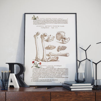 Andreas Vesalis - Drawing of Collection of Bones - Anatomy Art Print
