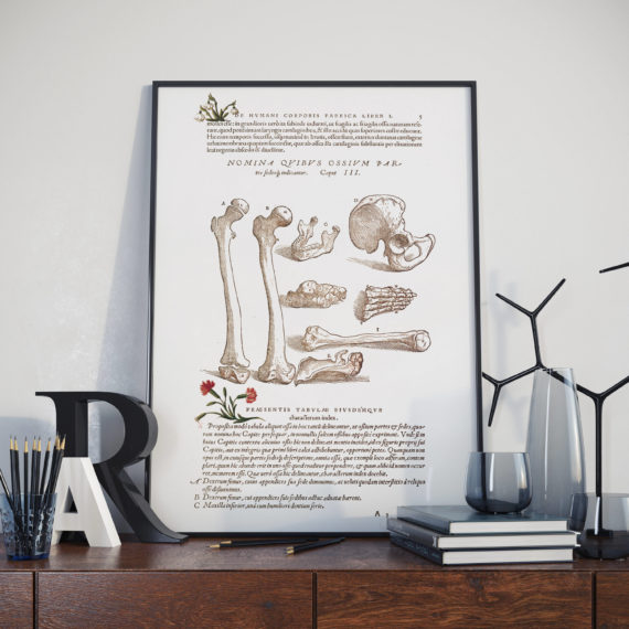 Andreas Vesalis – Drawing of Collection of Bones – Anatomy Art Print