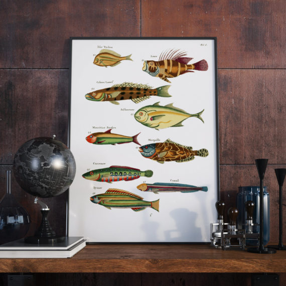 Fish of various colors and extraordinary figures – 1678 – Page 4