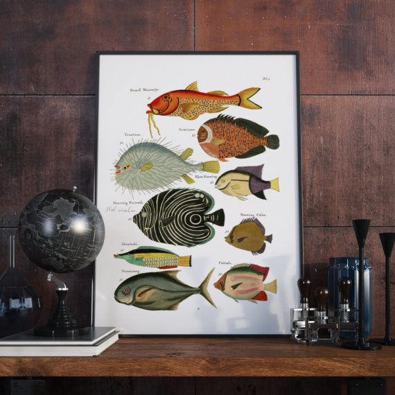 Aquarium Fish Art Print – Fish of various colors and extraordinary figures – 1678 – Page 3