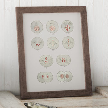 The Process of Cell Division Art Print