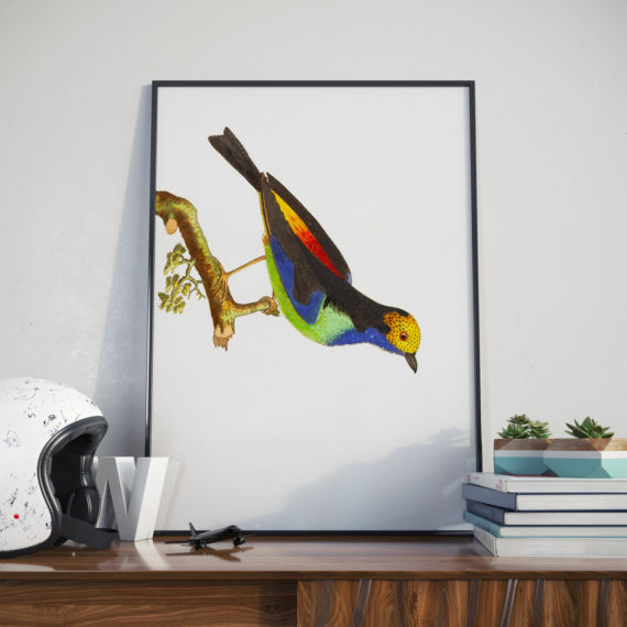 colourful-bird-hanging-on-tree-print-nature-illustration-bird-art-print-ornithology-5ab5f4391.jpg