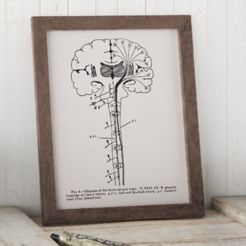 Diagram of the Direct Sensory Tract  - Neuron Print - Vintage Science Art Print - Science Poster - Science student gift - Neurology Gift
