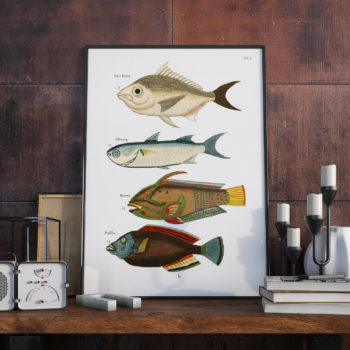 Fish, crayfish and crabs, of various colors and extraordinary figures - 1678 - Restored Art Print - Aquarium Room Decor - Fish Art Print