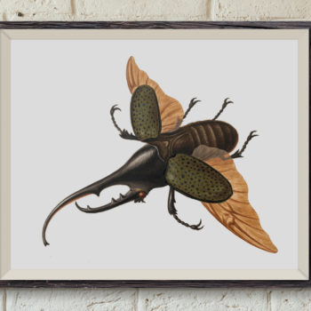 Hercules Beetle by George Edwards - 1755 - Restored Art Print - Coleopterology - Entomology Student Gift - Science Print