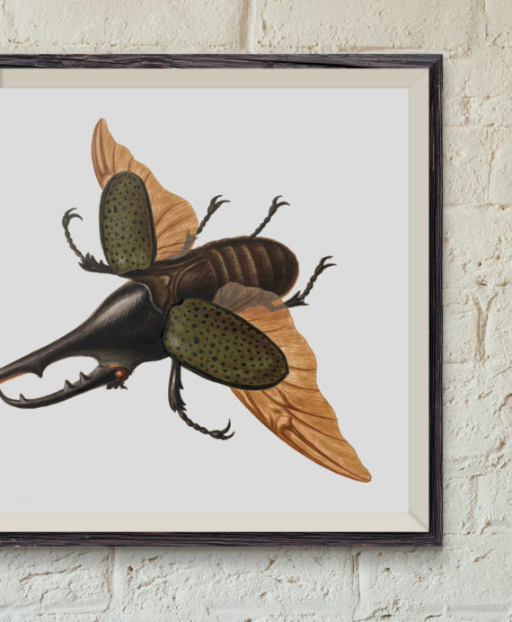 hercules-beetle-by-george-edwards-1755-restored-art-print-coleopterology-entomology-student-gift-science-print-5ab5f6003.jpg