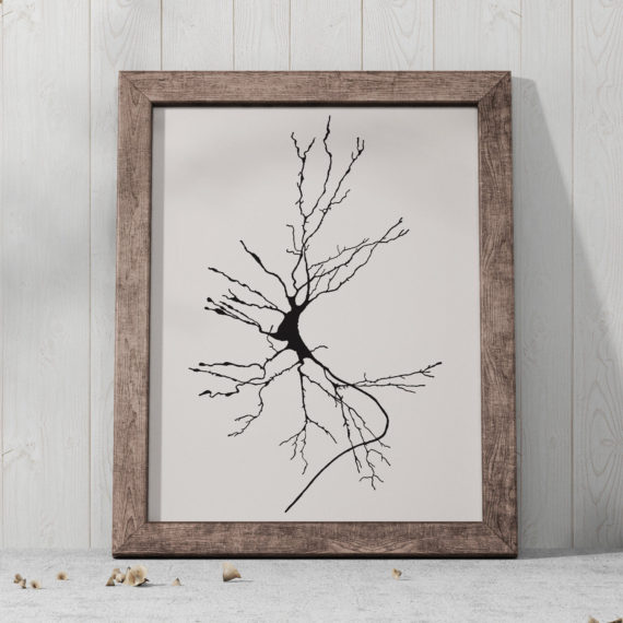 Dieters cells – Neurology Art Print
