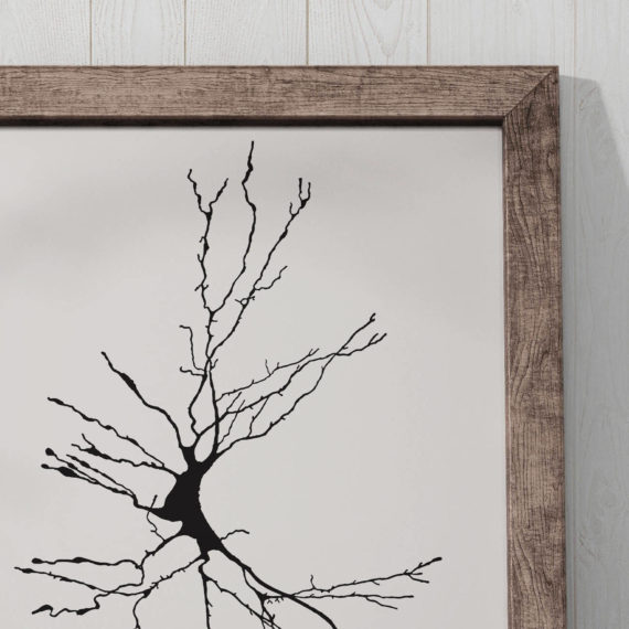 neuron-sketch-print-dieters-cell-vintage-science-art-print-science-poster-science-student-gift-idea-neurology-gift-canvas-art-5ab5ea345.jpg