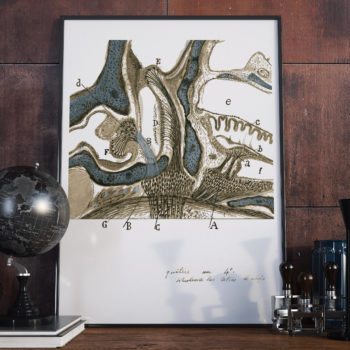 A restored Science art print of The Inner Ear by Santiago Ramon y Cajal was not only interested in the brain, he also studied other parts of the body, including the inner ear.