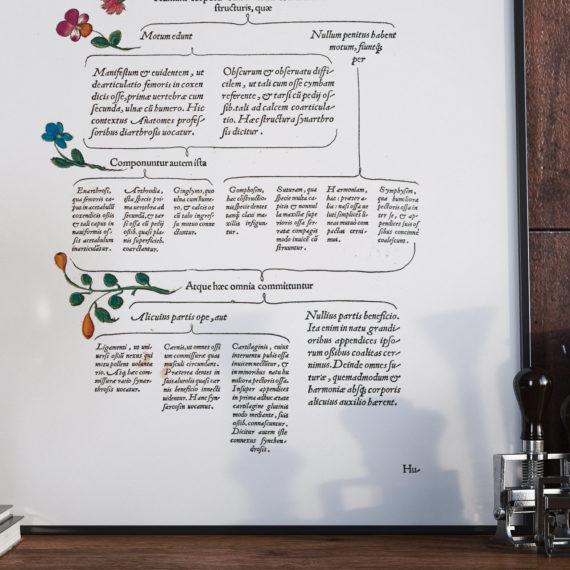de-humani-cororis-fabrica-print-the-human-body-andreas-vesalius-1543-manuscript-art-vintage-medical-art-print-science-gift-5b134d4f5.jpg