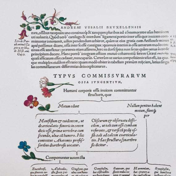 de-humani-cororis-fabrica-print-the-human-body-andreas-vesalius-1543-manuscript-art-vintage-medical-art-print-science-gift-5b134d537.jpg