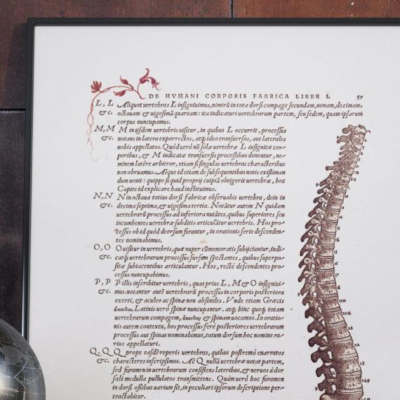de-humani-cororis-fabrica-print-the-human-spine-andreas-vesalius-1543-manuscript-art-vintage-medical-art-print-science-gift-5b134d2e5.jpg