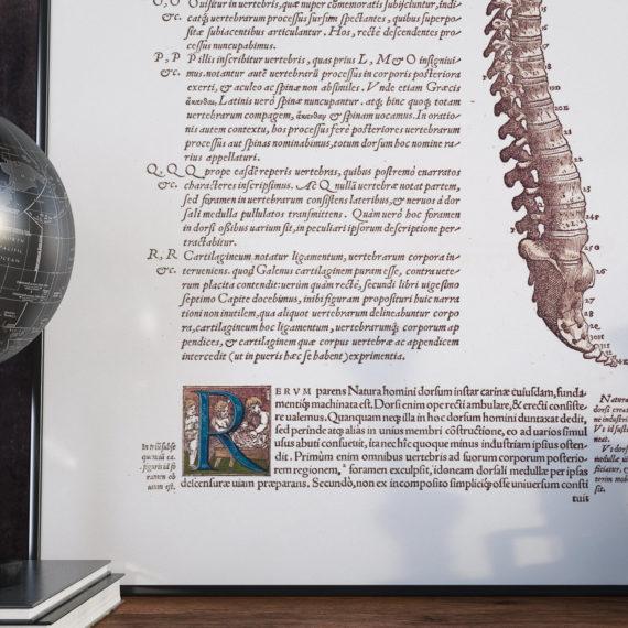 de-humani-cororis-fabrica-print-the-human-spine-andreas-vesalius-1543-manuscript-art-vintage-medical-art-print-science-gift-5b134d316.jpg