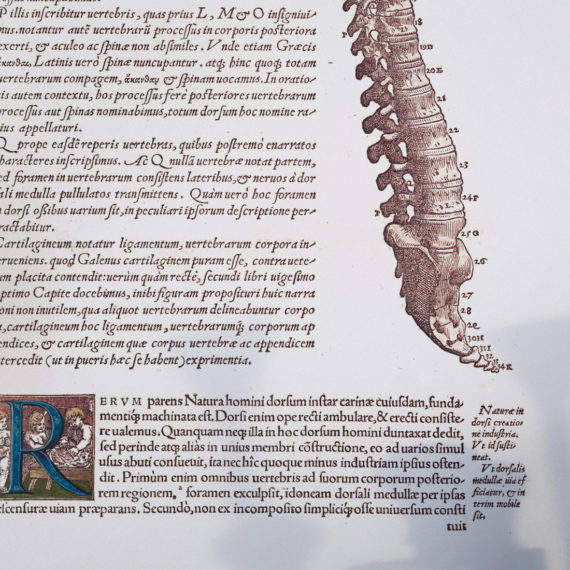 de-humani-cororis-fabrica-print-the-human-spine-andreas-vesalius-1543-manuscript-art-vintage-medical-art-print-science-gift-5b134d347.jpg