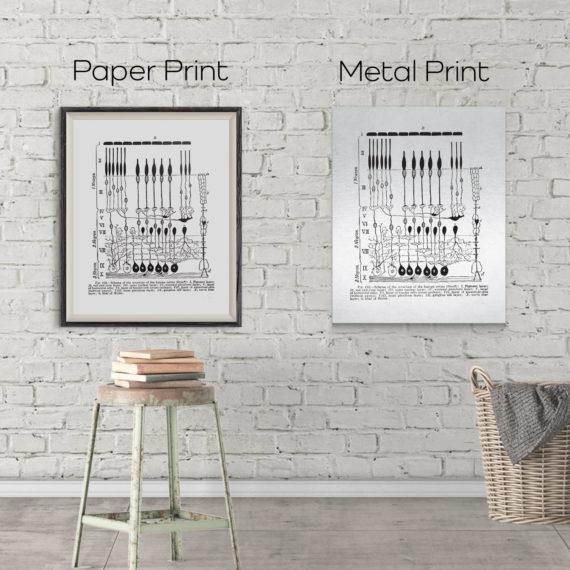 diagram-of-the-structure-of-the-human-retina-neuron-science-art-print-neuroscience-art-neurology-print-5b134c4d4.jpg