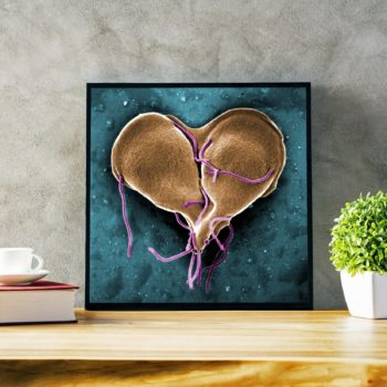 Love Heart Shaped Bacteria Print - Giardia lamblia Protozoan Under Electron Microscope Science Print - Microbiology Poster - Cell Division